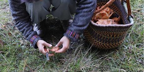 Wild Mushroom Hunt - EVENT CANCELLED COVID-19 tickets