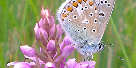 Wildflowers and Butterflies of Jacksons' Brickworks Local Nature Reserve tickets