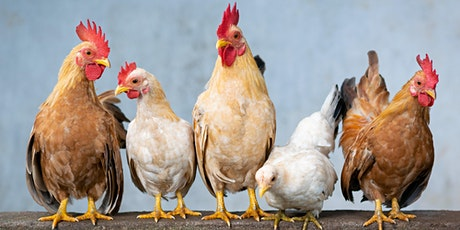 Cancelled: Backyard poultry tickets