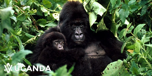 Conferencia viajera gratuita: Descubre Uganda y sus Gorilas