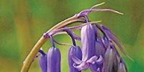 The Wildflowers of Ireland - an illustrated talk by author by author Zoë Devlin tickets
