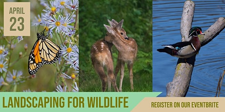 Landscaping for Wildlife Webinar tickets