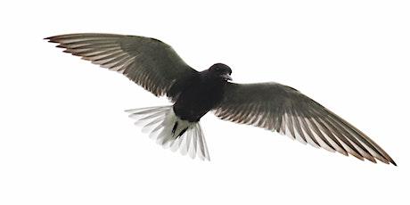 Black Tern Program and Nest Platform Building Workshop tickets