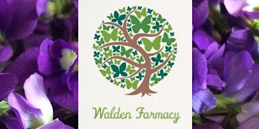 Walden Farmacy herb ID walk