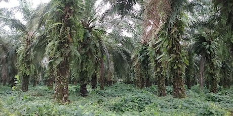 Free Talk: The Problem with Palm Oil tickets