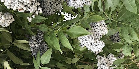 Elderberry 101: Celebrate the season of spring! tickets