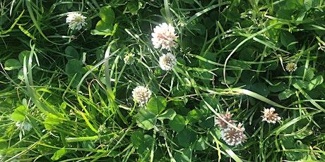 Wild food harvest  / Plant Spirit Communication tickets