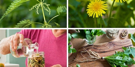 Making a spring detox tincture with weeds tickets