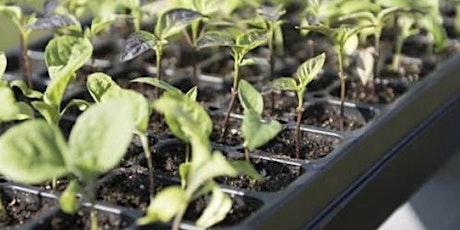 Grow A Garden tickets