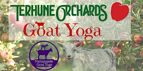 Goat Yoga at Terhune Orchard: Namaaaste Goat Yoga tickets
