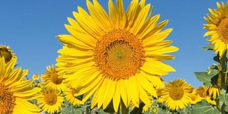 The Sunflower Festival @Unexpected Farm NJ tickets