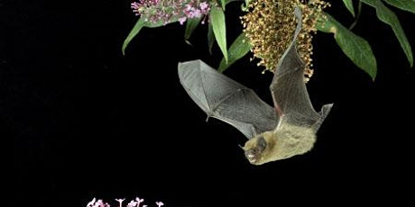 Delaval Dusk Bat Night tickets