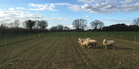 Grazing Cover Crops with Sheep - Field Lab Meeting - POSTPONED tickets