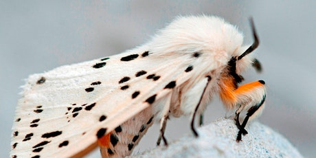 Nature Course: Discovering Moths tickets