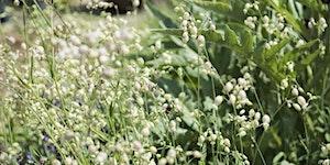 Rethinking Urban Weeds: wildflowers, food and medicine