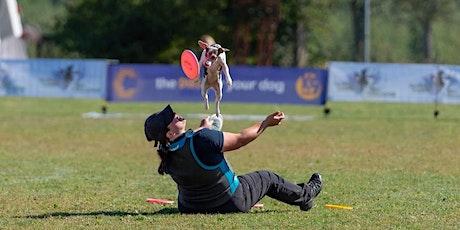 Demonstratie hondenfrisbee door Belgisch Kampioen tickets