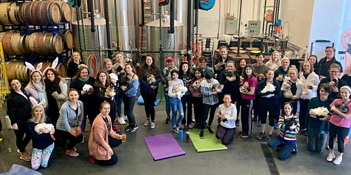 Hoppy Hour: Meditation with Bunnies at Lost Boy Cider