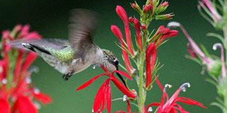 Creating Wildlife Habitat tickets