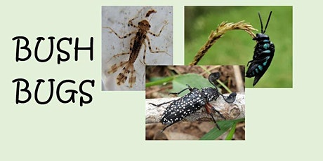 Bush Bugs - What's crawling in your backyard?  -  Event Cancelled tickets