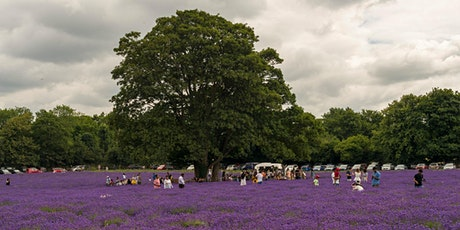 Lavender Fields walk - Woodmansterne - Sunday, 02 August 2020 tickets