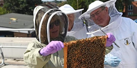 Bee experience, honey tasting and honey beer tasting tickets
