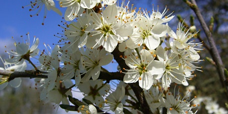 Springtime Mindful Mornings - Creative Writing tickets