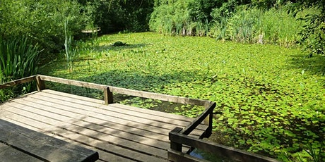 Pond Dipping at Ryton Pools Country Park tickets