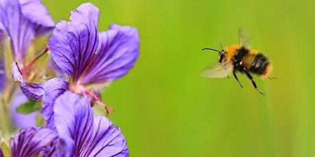 Beginner's bumblebee workshop tickets