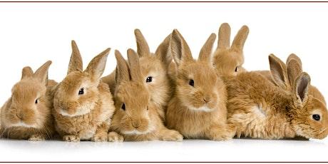 2020 Midlands Region 4-H Rabbit Project DEADLINE EXTENDED tickets