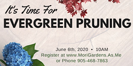 It's Time For Pruning Evergreens : Garden Seminar tickets