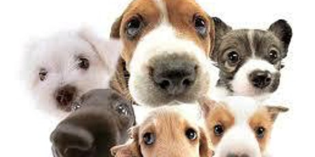 Puppy Training 8 Week Course - Bluebell Hill Maidstone tickets