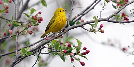 Birding at Cary Institute 2020 - Cary East/Gifford  tickets