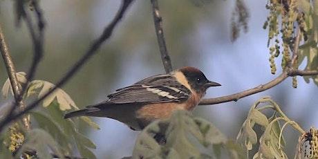 Birdwatching Walk with the Hudson Valley Birdman tickets