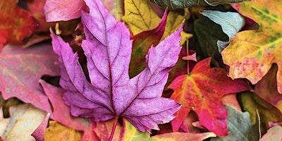 Autumn Equinox Celebration & Reiki Share