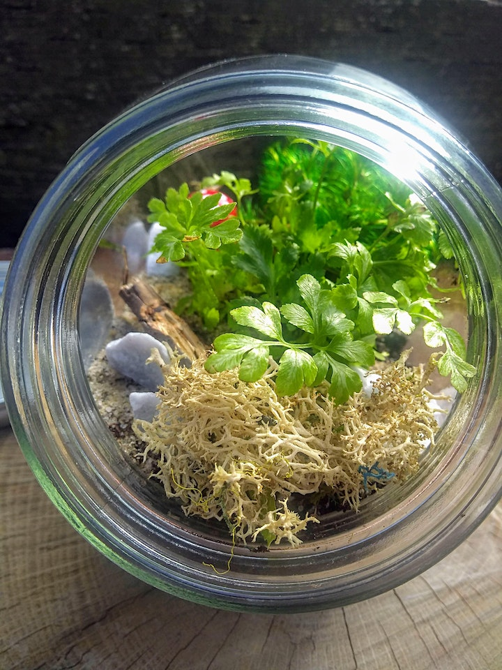 Create Your Own Closed Air Terrarium: PlantHer Plant Night at Counterweight image