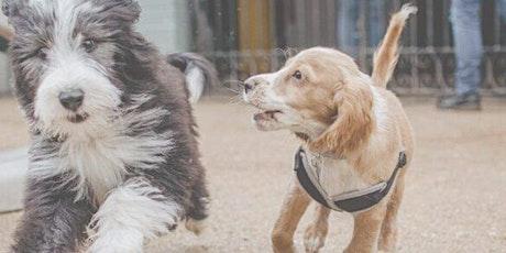Scenterbarks Puppy Party tickets