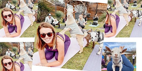 Goat Yoga TROPHY CLUB, TX! tickets