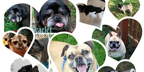 NamastHay Goat Yoga of Pittsburgh™ to Benefit Guardian Angels Pug Rescue tickets