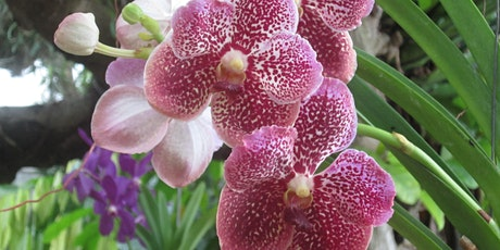 Advanced Orchid Class: Growing Vandas Outside tickets