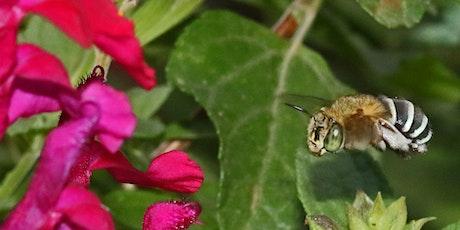 Wild Pollinator Count tickets