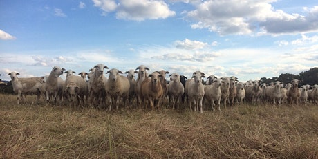 Planning for farm viability in challenging times - Wooragee tickets