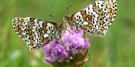 Identification and Monitoring of Butterflies & Day Flying Moths tickets