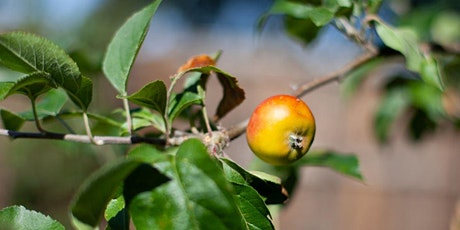 Pruning and winter management of a fruit garden tickets