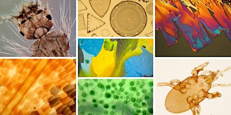 Zoom In-Explore-Reveal: Microbiology and Microscopy Summer school 2020 tickets