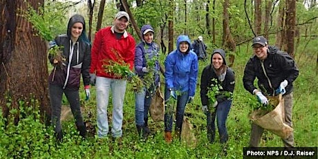 Invasive Plant Removal Drop In - August 27 tickets