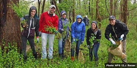 Invasive Plant Removal Drop In - October 8 tickets