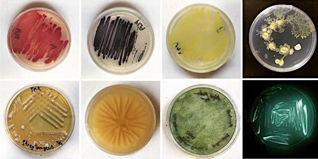 Find - Grow - See - Beginners Microbiology Course 2020 tickets