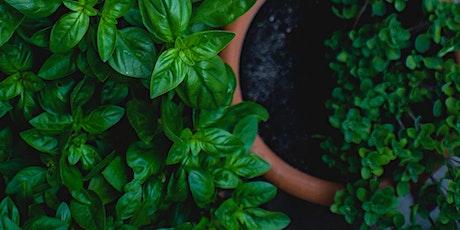 Plant Propagation Workshop tickets