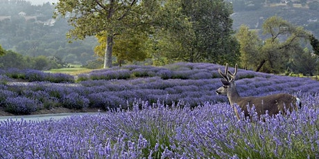 4th Annual Carmel Valley Ranch Lavender Harvest Festival tickets