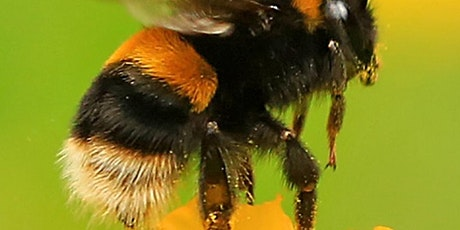 Identifying Bees and Hoverflies at Woolley Firs tickets